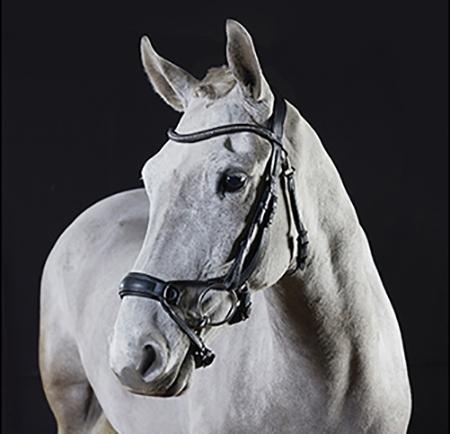 David Dyer Saddles - GFS Bridles & Bridle Accessories