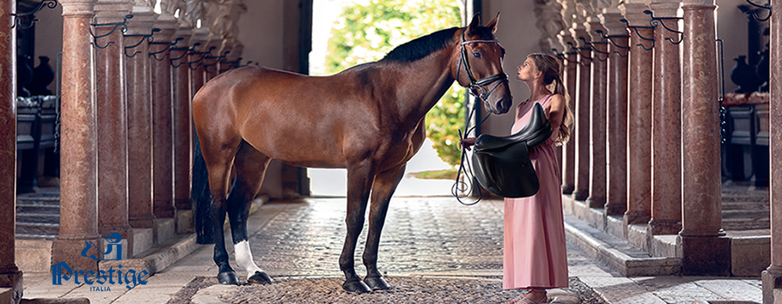 d8d81285e47 David Dyer Saddles at Frogpool Manor Farm - Equestrian Supplies Shop